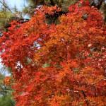 秋、深まる(クイズ付き)