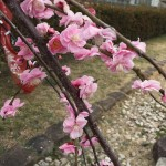紫衣ノ忍現世録〜その十四、「初音」という言の葉に〜
